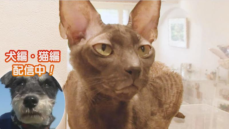 猫編(45)お母さんの○○が大好き! 他
