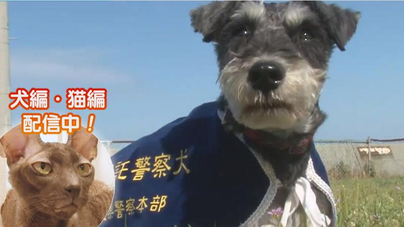犬編(45)ちっちゃな警察犬のスゴイ能力!