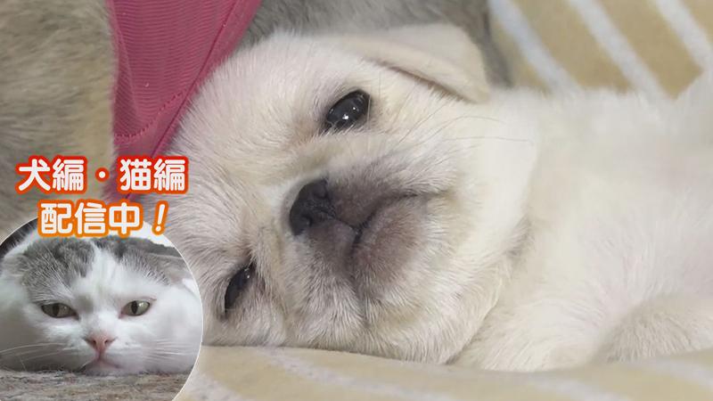 犬編(53)怖いもの知らず新人犬VSやきもち先輩犬
