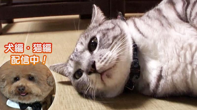 猫編(56)看板猫の珍サービスを総力チェック