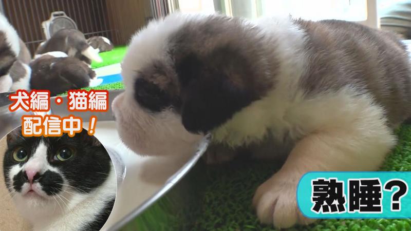 犬編(62)○○が大好きな赤ちゃん 他