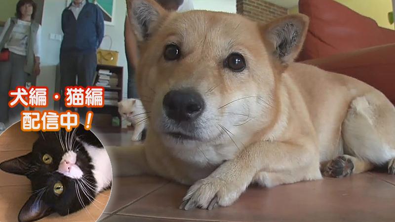 犬編(70)チェコで北海道犬が大人気の理由とは?
