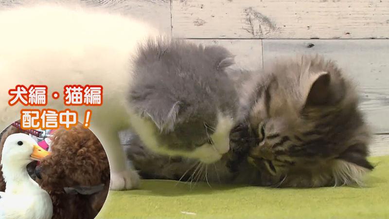 猫編(76)食べるのが下手な猫 他