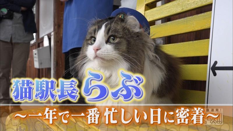 超人気の猫駅長! 一年で一番忙しい日に密着!